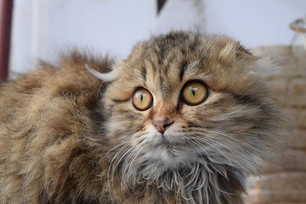 Schöne flauschige katze