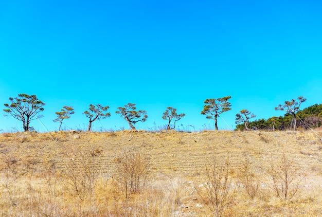 Schöne form von bäumen im winter, südkorea