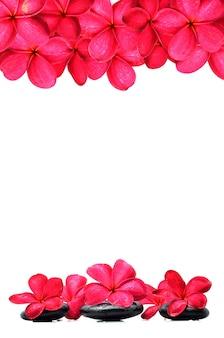 Schöne frangipani-blüten mit zen-stein
