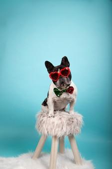 Schöne französische bulldogge mit roter herzförmiger sonnenbrille und fliege mit zweifarbigen pailletten, die auf einem hocker sitzen und in richtung kamera schauen. isoliertes bild. valentinstag konzept.