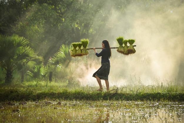 Schöne frau bauer hält reis zu fuß im reisfeld junges mädchen landwirtschaft landwirtschaft