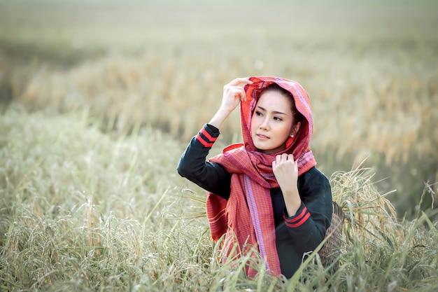 Schöne frau, thailändischer landwirt, der reisfelder erntet
