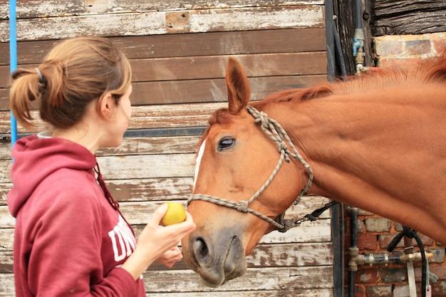 Schöne frauen geben ihrem pferd einen apfel