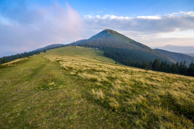 Schöne friedliche ansicht des grünen grasbewachsenen steilen abhangs und der ländlichen kleinen bauernhütten am fuße des herrlichen entfernten karpatenberges in der ukraine am hellen sonnigen sommertag.