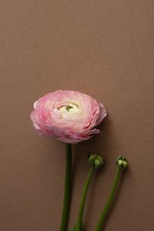 Schöne frisch blühende einzelne lachsfarbene ranunkelblume auf der braunen vertikalen seitenansicht