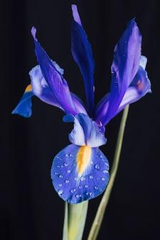 Schöne frische blaue blume im tau