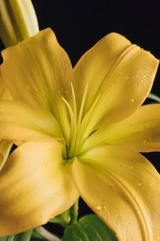 Schöne frische gelbe blume im tau