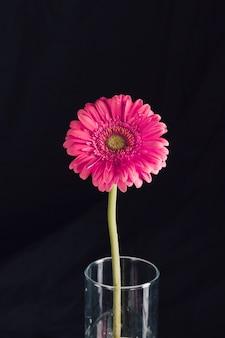Schöne frische hellrosa blüte im vase