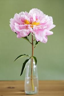 Schöne frische rosa pfingstrosen in glasvase auf grünem hintergrundmodernes stilllebennatürlicher blumenh...