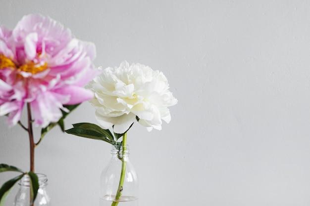 Schöne frische rosa und weiße pfingstrosen in glasvase auf grauem hintergrundmodernes stilllebennatürliche blumen...