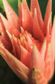 Schöne frische rosafarbene blume mit tau
