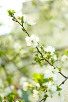 Schöne fruchtblüte im freien