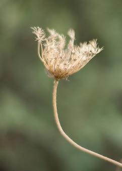 Schöne frühlingsblume