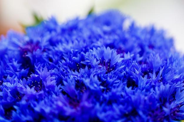Schöne frühlingsblumen blue centaurea cyanus im hintergrund. blaues blumenmuster.