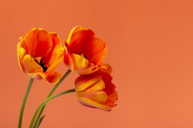 Schöne frühlingsblumen mit kopierraum. gelbe und rote tulpenblumen auf pastellhintergrund. konzept für feiertage.