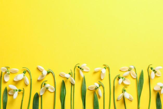 Schöne frühlingsschneeglöckchenblumen auf farbhintergrund, raum für text