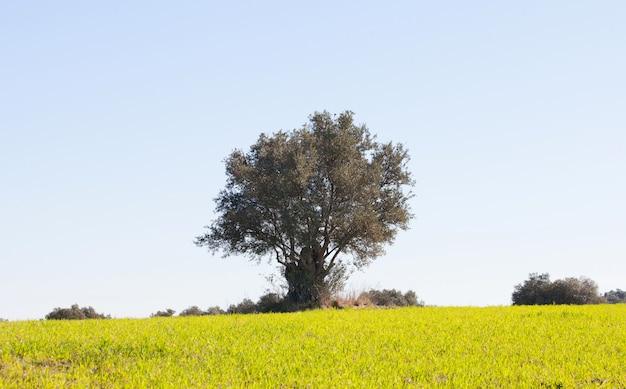 Schöne frühlingswiese mit hohen gräsern und eichen
