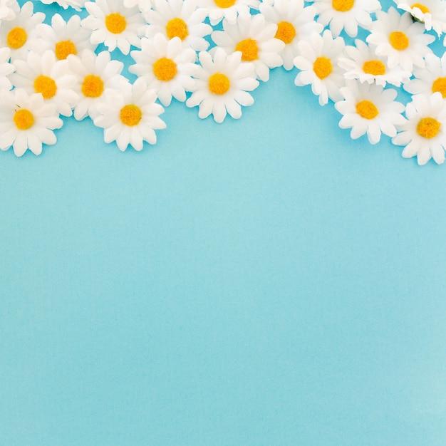 Schöne gänseblümchen auf blauem hintergrund mit platz an der unterseite