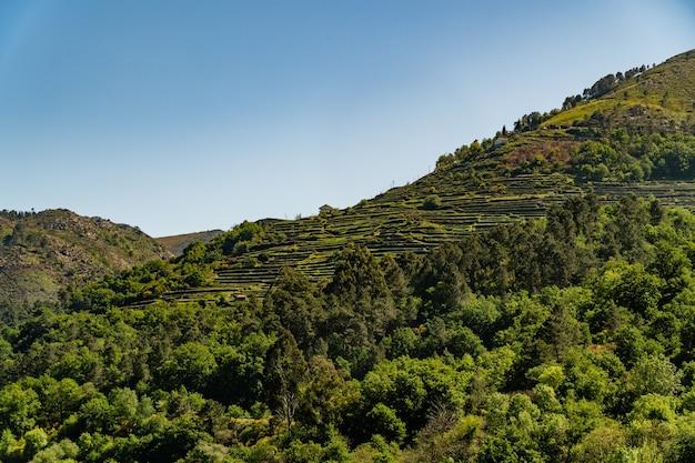 Schöne gebirgslandschaft mit vielen bäumen und viel grün