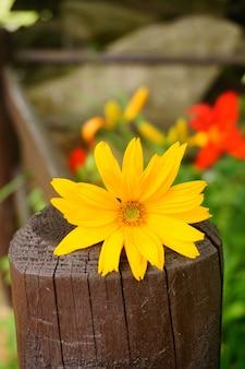 Schöne gelbe blume auf einem holzzaun im garten