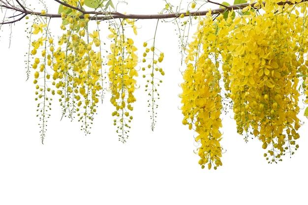Schöne gelbe blume auf isolat auf weißem hintergrund. mit beschneidungspfad speichern.