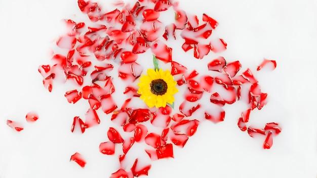 Schöne gelbe blume umgeben durch die roten blumenblätter, die auf wasser schwimmen