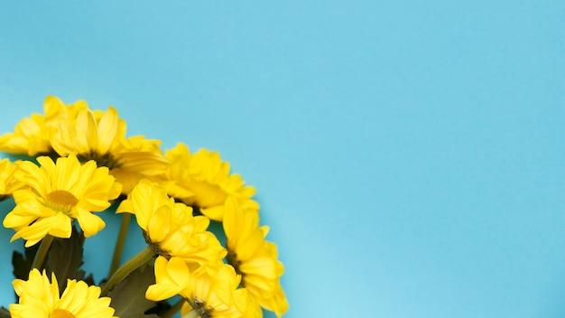 Schöne gelbe blumen auf blauem hintergrundkopienraum