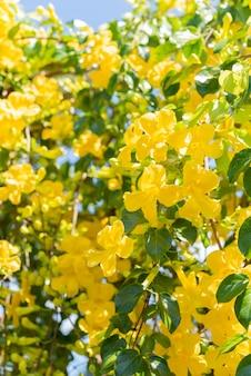 Schöne gelbe blumen mit grünen blättern gegen blauen himmel