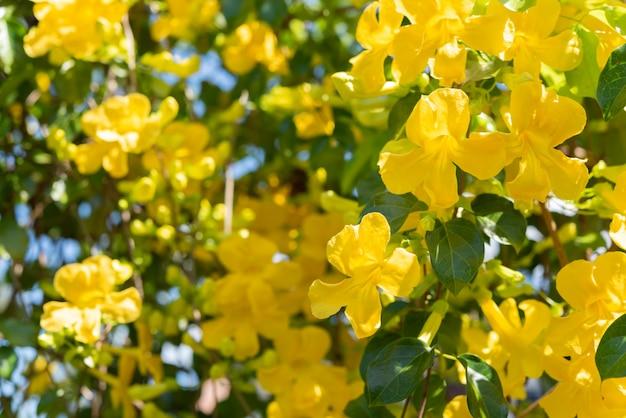 Schöne gelbe blumen mit grünen blättern