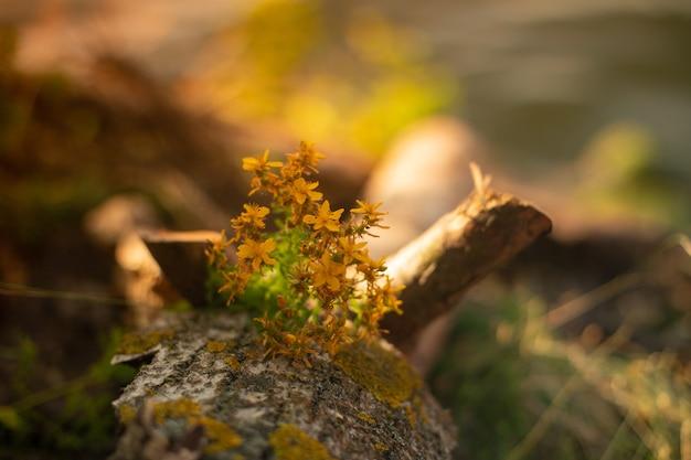 Schöne gelbe blumen wachsen am baum