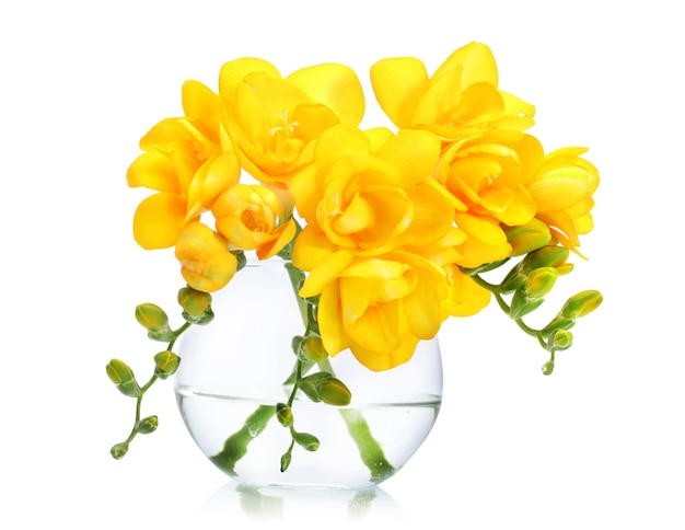 Schöne gelbe freesien in vase auf weiß