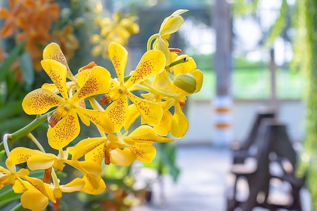 Schöne gelbe orchidee und gemusterte braune stellen hintergrund verwischten blätter in einem sommergarten.