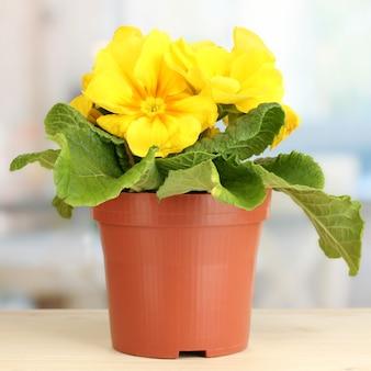 Schöne gelbe primel im blumentopf auf hölzernem fensterbrett