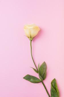 Schöne gelbe rose auf rosa hintergrund