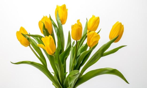 Schöne gelbe tulpen isoliert auf weißem hintergrund