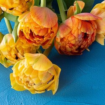 Schöne gelbe tulpen. nahansicht