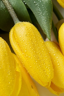 Schöne gelbe tulpen