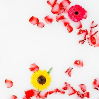 Schöne gelbe und rote blumen mit den blumenblättern, die auf wasser schwimmen