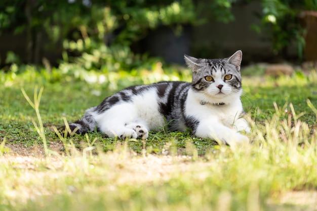 Schöne gesunde katze