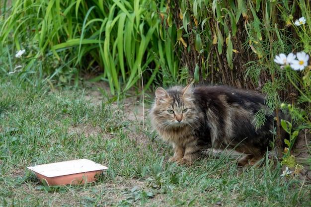 Schöne getigerte katze, die neben einer futterschüssel sitzt und auf den garten gelegt wird.