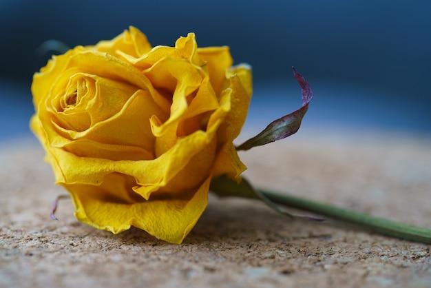 Schöne getrocknete rose