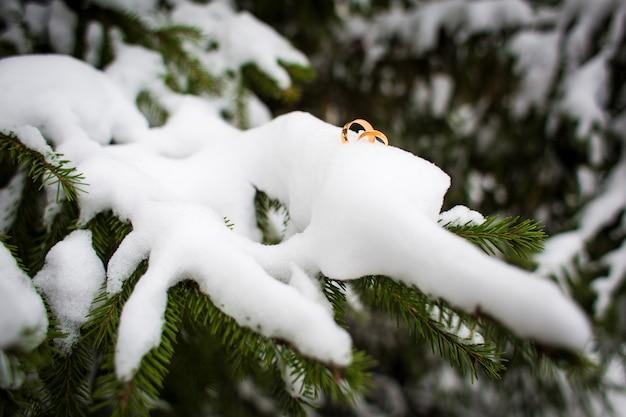Schöne goldeheringe auf dem schnee