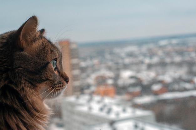 Schöne graue katze, die auf fensterbank sitzt und zu einem fenster schaut. panoramablick aus dem fenster eines hochhauses. speicherplatz kopieren. stadthintergrund.