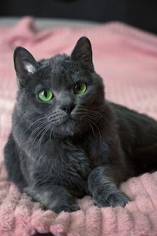 Schöne graue katze mit grünen augen liegt auf der couch