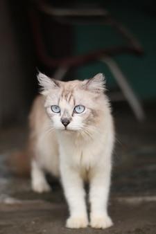 Schöne graue katze vor dem haus
