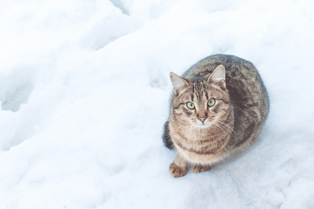 Schöne graue straßenkatze auf schneehintergrund