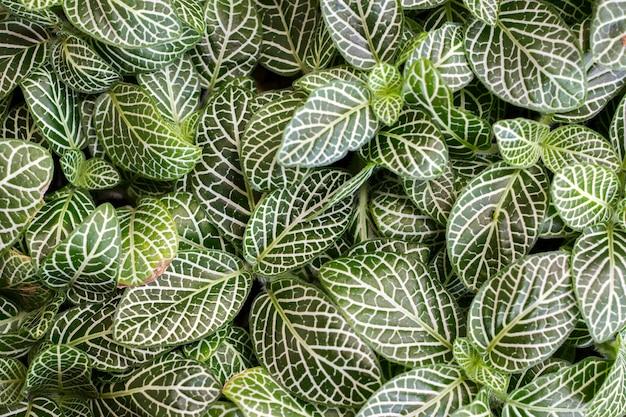 Schöne grean und weißblätter als natürlicher hintergrund