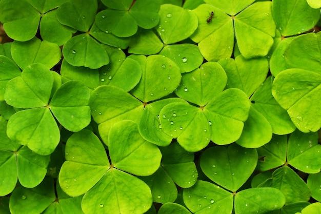 Schöne grüne blätter als symbol für fauna und natur
