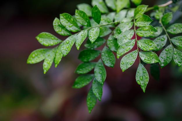 Schöne grüne blätter mit wassertropfen