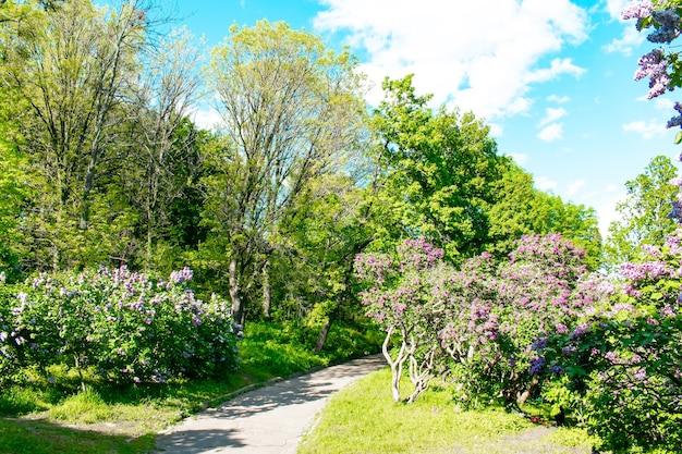 Schöne grüne botanische landschaftsgestaltung im garten, park mit büschen mit blumen. szenischer sommergartenarbeit naturhintergrund, konzept.